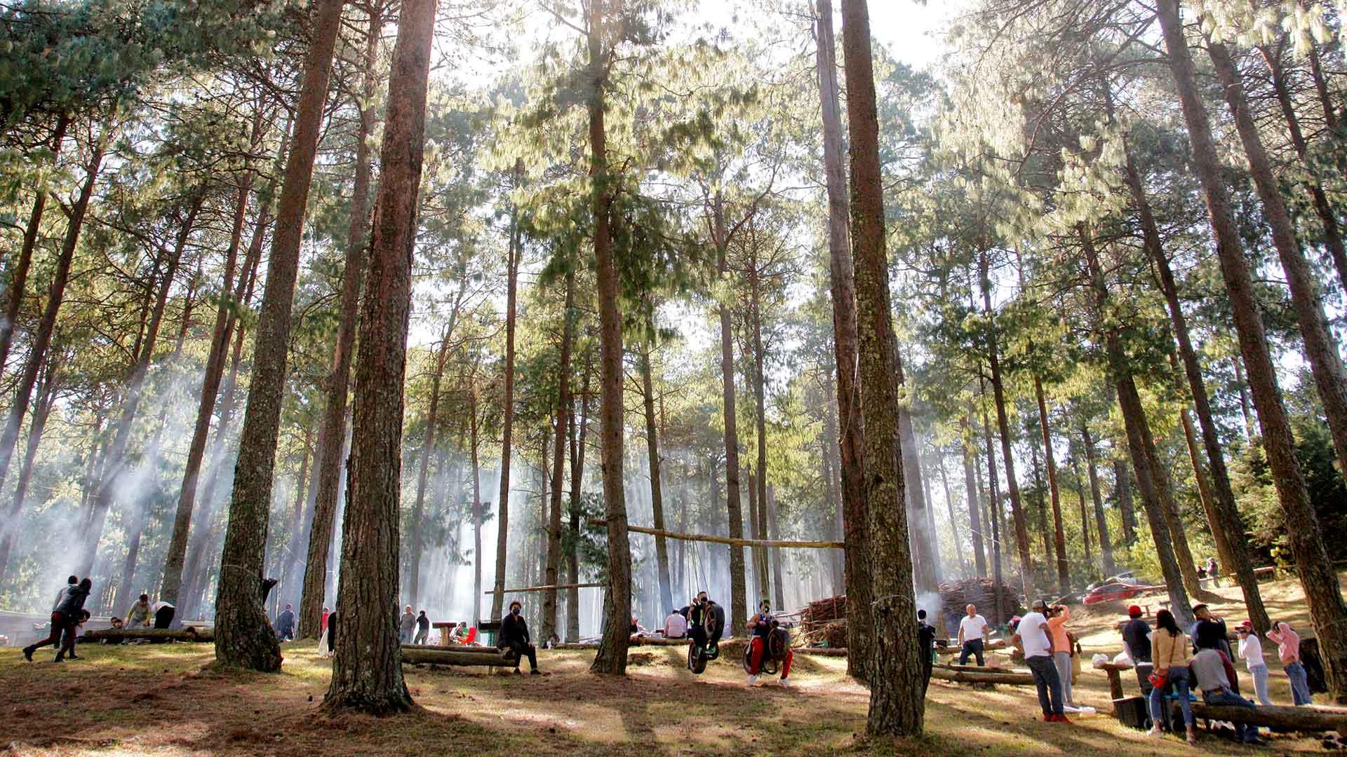El-Bosque-del-ciclo-verde-Noel-carrusel-escoge-y-corta-1