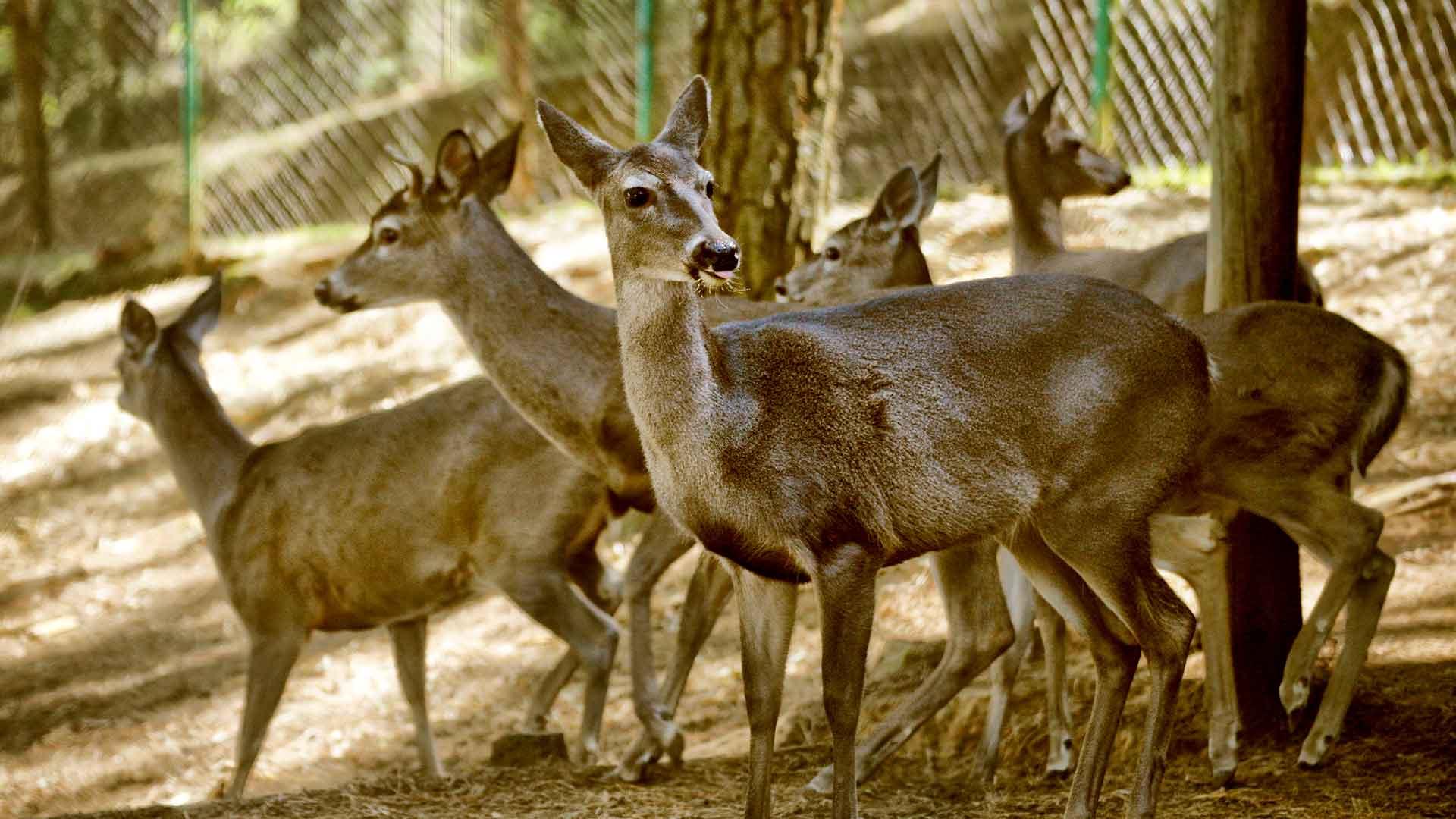 El-Bosque-del-ciclo-verde-Noel-carrusel-escoge-y-corta-3
